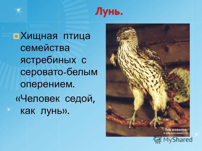 Лунь. Хищная птица семейства ястребиных с серовато - белым оперением. « Человек седой, как лунь ».