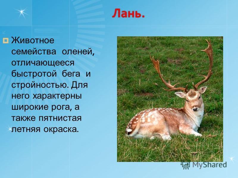 Лань. Животное семейства оленей, отличающееся быстротой бега и стройностью. Для него характерны широкие рога, а также пятнистая летняя окраска.