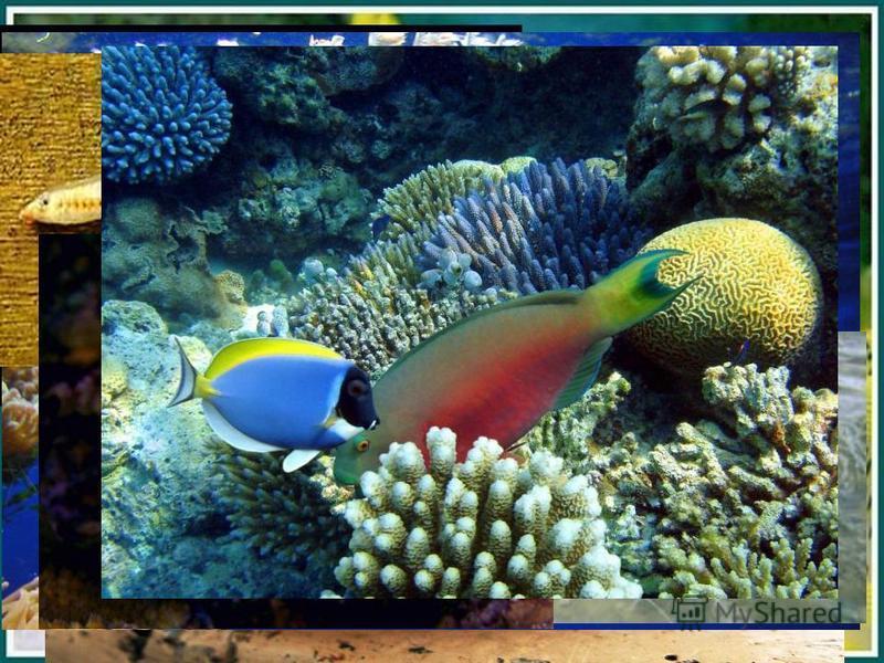 Позвоночные животные Живут в воде Тело покрыто чешуёй Передвигаются при помощи плавников Дышат жабрами Рыбы
