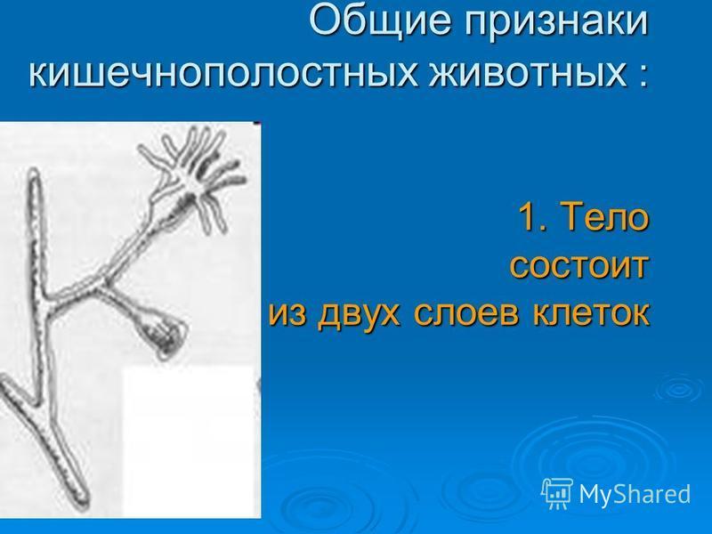 Общие признаки кишечнополостных животных : 1. Тело состоит из двух слоев клеток Общие признаки кишечнополостных животных : 1. Тело состоит из двух слоев клеток
