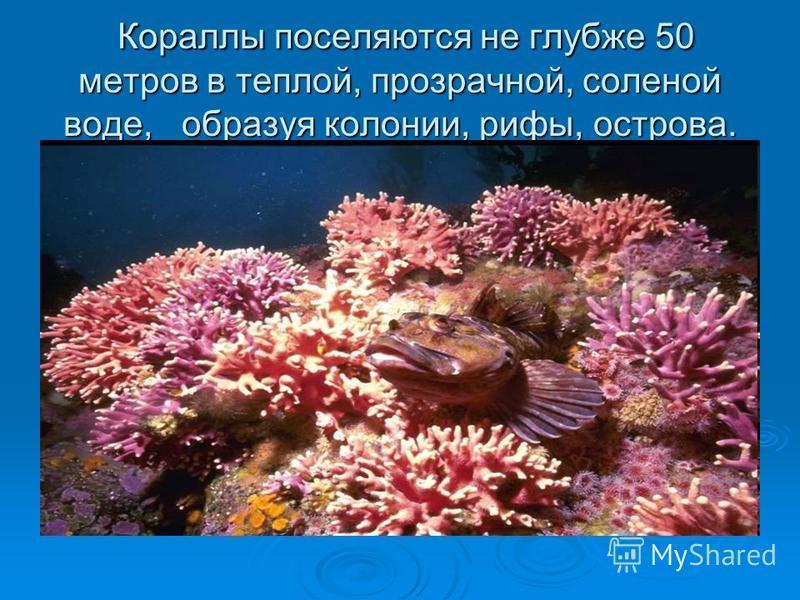 Кораллы поселяются не глубже 50 метров в теплой, прозрачной, соленой воде, образуя колонии, рифы, острова. Кораллы поселяются не глубже 50 метров в теплой, прозрачной, соленой воде, образуя колонии, рифы, острова.