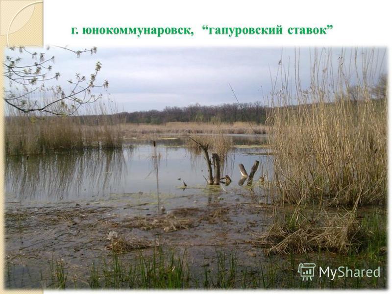 г. юнокоммунаровск, гапуровский ставок