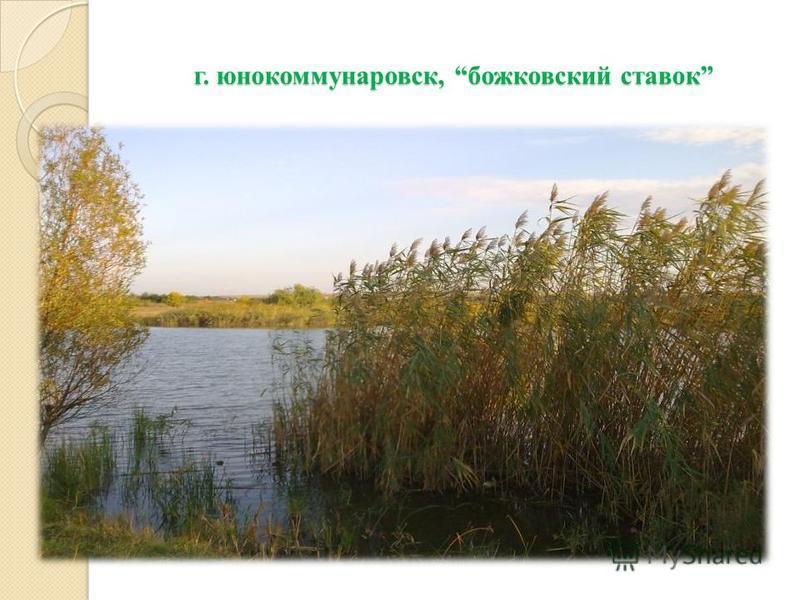 г. юнокоммунаровск, божковский ставок