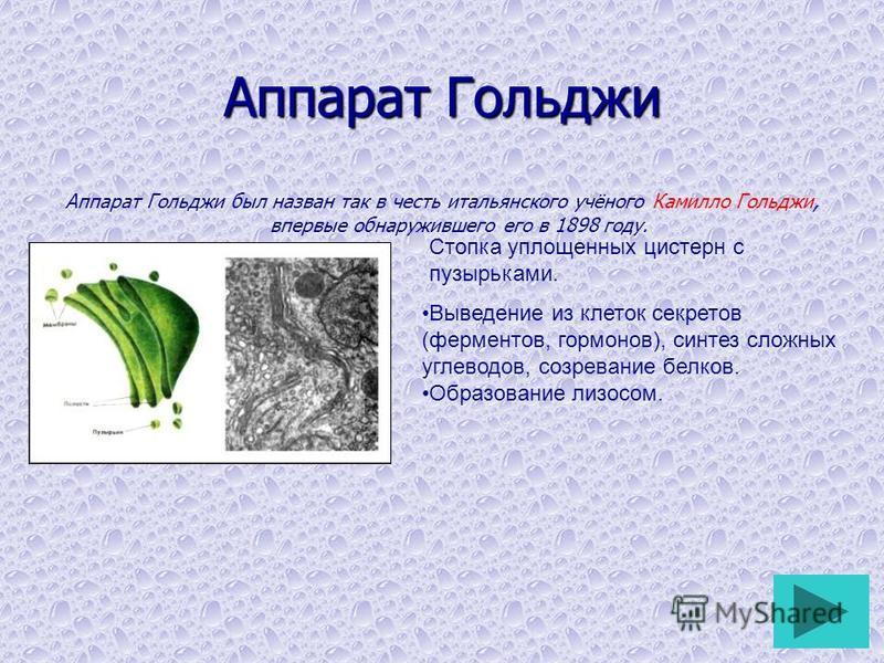 Аппарат Гольджи Аппарат Гольджи был назван так в честь итальянского учёного Камилло Гольджи, впервые обнаружившего его в 1898 году. Стопка уплощенных цистерн с пузырьками. Выведение из клеток секретов (ферментов, гормонов), синтез сложных углеводов,