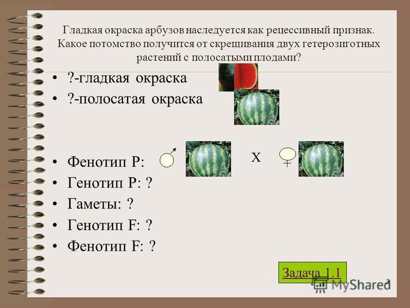 3 Гладкая окраска арбузов наследуется как рецессивный признак. Какое потомство получится от скрещивания двух гетерозиготныйх растений с полосатыми плодами? ?-гладкая окраска ?-полосатая окраска Фенотип Р: Генотип Р: ? Гаметы: ? Генотип F: ? Фенотип F