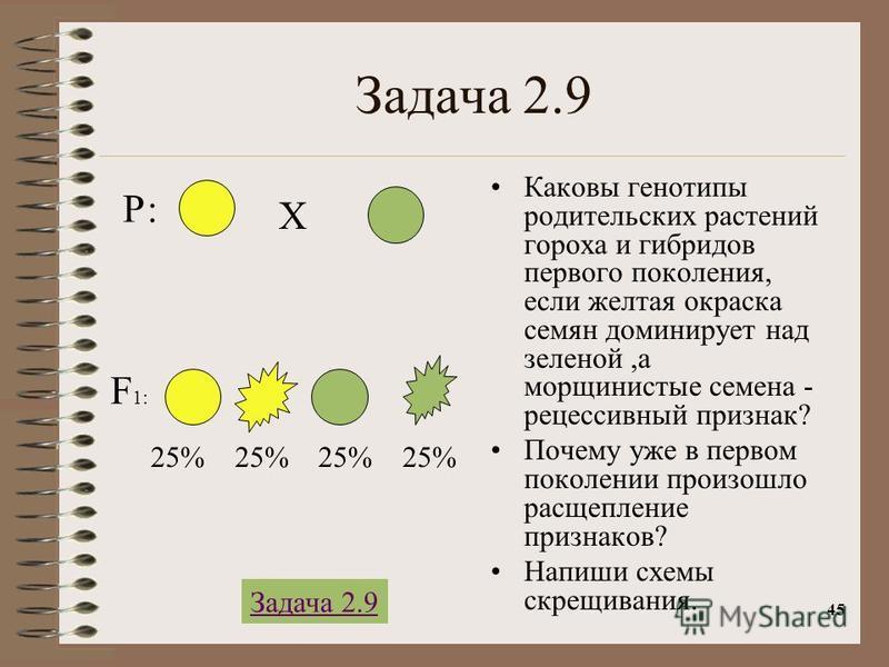 45 Задача 2.9 Каковы генотипы родительских растений гороха и гибридов первого поколения, если желтая окраска семян доминирует над зеленой,а морщинистые семена - рецессивный признак? Почему уже в первом поколении произошло расщепление признаков? Напиш