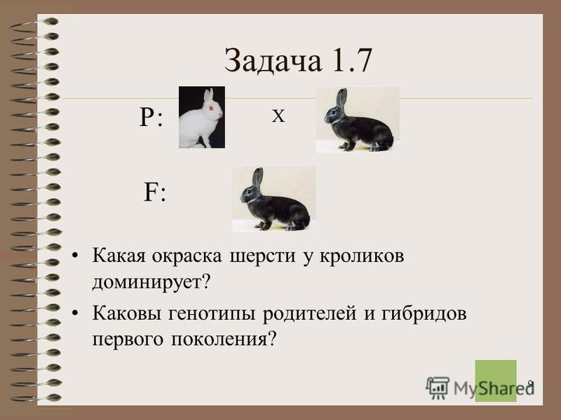 9 Задача 1.7 Какая окраска шерсти у кроликов доминирует? Каковы генотипы родителей и гибридов первого поколения? Х F:F: Р: