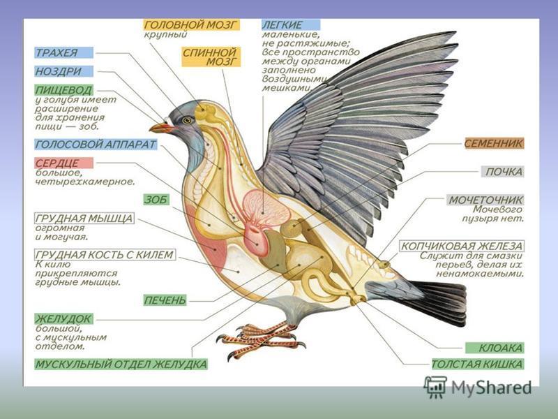 У птиц более сложное поведение, чем у пресмыкающихся. Приведите примеры более сложного поведения. Выберите из приведенного теста условный рефлекс: 1. Постройка гнезда 2. Поиск пищи 3. Прибегают на голос птичницы 4. Кормление птенцов. - гнездование пт