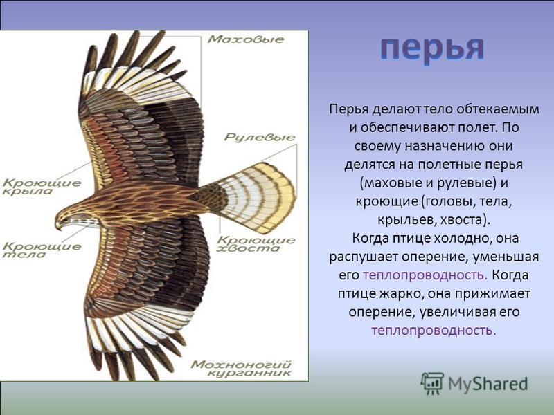 Природа подарила птицам уникальную одежду, которая Природа подарила птицам уникальную Одежду-перьевой покров, который обогревает в холоди защищает и главное –это одежда для полёта