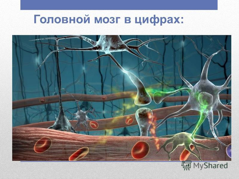 Головной мозг в цифрах: