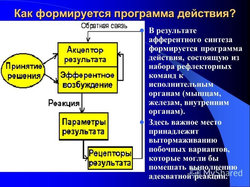 Как формируется программа действия? В результате афферентного синтеза формируется программа действия, состоящую из набора рефлекторных команд к исполнительным органам (мышцам, железам, внутренним органам). Здесь важное место принадлежит вытормаживани