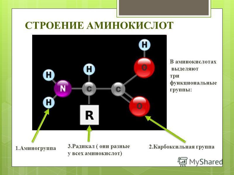 СТРОЕНИЕ АМИНОКИСЛОТ В аминокислотах выделяют три функциональные группы: 1. Аминогруппа 2. Карбоксильная группа 3. Радикал ( они разные у всех аминокислот)
