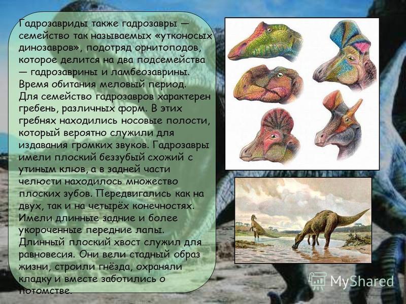 Гадрозавриды также гадрозавры семейство так называемых «утконосых динозавров», подотряд орнитоподов, которое делится на два подсемейства гадрозаврины и ламбеозаврины. Время обитания меловый период. Для семейство гадрозавров характерен гребень, различ