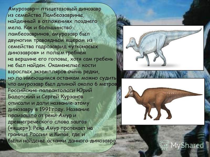 Амурозавр птицетазовый динозавр из семейства Ламбеозаврины, найденный в отложениях позднего мела. Как и большинство ламбеозавринов, амурозавр был двуногим травоядным ящером из семейства гадрозаврид «утконосых динозавров» и полым гребнем на вершине ег