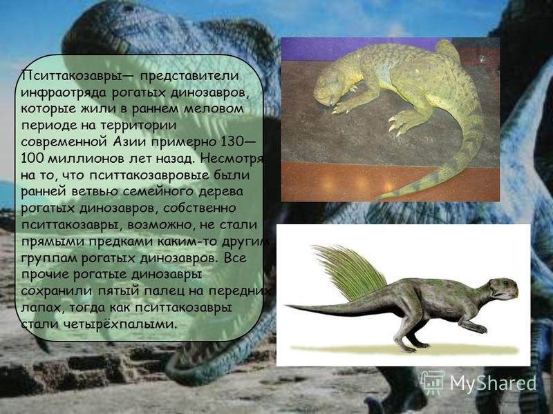 Пситтакозавры представители инфраотряда рогатых динозавров, которые жили в раннем меловом периоде на территории современной Азии примерно 130 100 миллионов лет назад. Несмотря на то, что пситтакозавровые были ранней ветвью семейного дерева рогатых ди