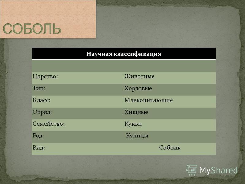 Научная классификация Царство:Животные Тип:Хордовые Класс:Млекопитающие Отряд:Хищные Семейство:Куньи Род: Куницы Вид:Соболь
