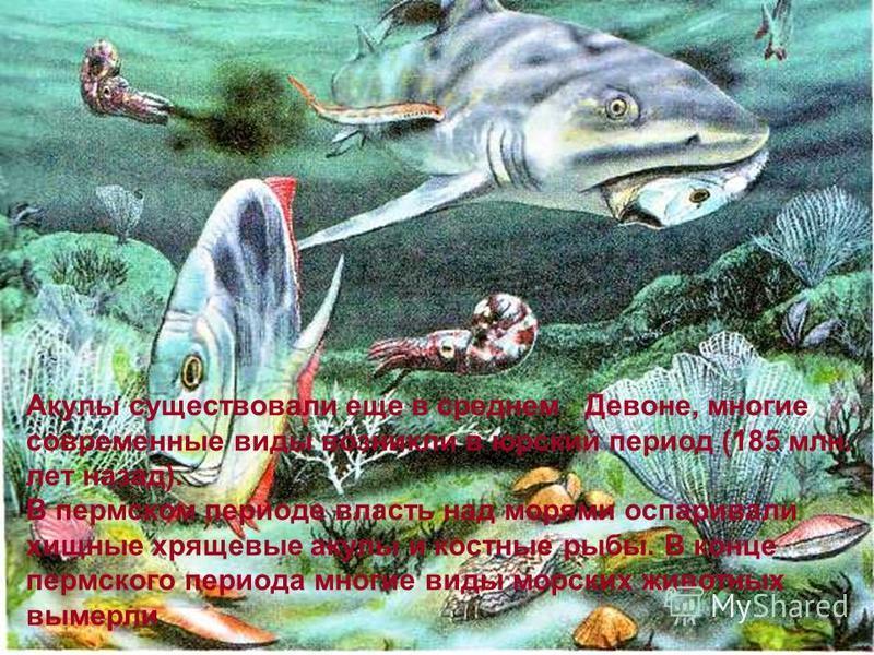 Акулы существовали еще в среднем Девоне, многие современные виды возникли в юрский период (185 млн. лет назад). В пермском периоде власть над морями оспаривали хищные хрящевые акулы и костные рыбы. В конце пермского периода многие виды морских животн