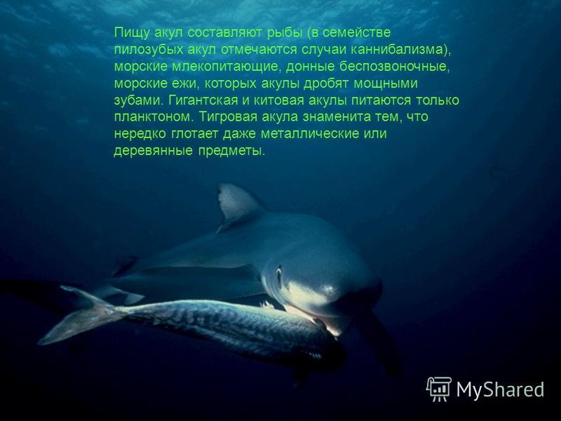 Пищу акул составляют рыбы (в семействе пилозубых акул отмечаются случаи каннибализма), морские млекопитающие, донные беспозвоночные, морские ежи, которых акулы дробят мощными зубами. Гигантская и китовая акулы питаются только планктоном. Тигровая аку