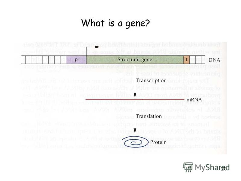 20 What is a gene?