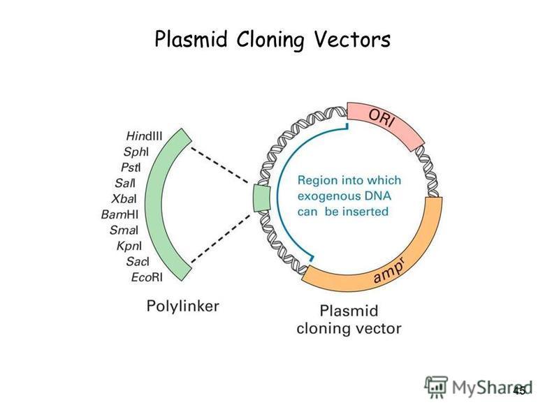 45 Plasmid Cloning Vectors