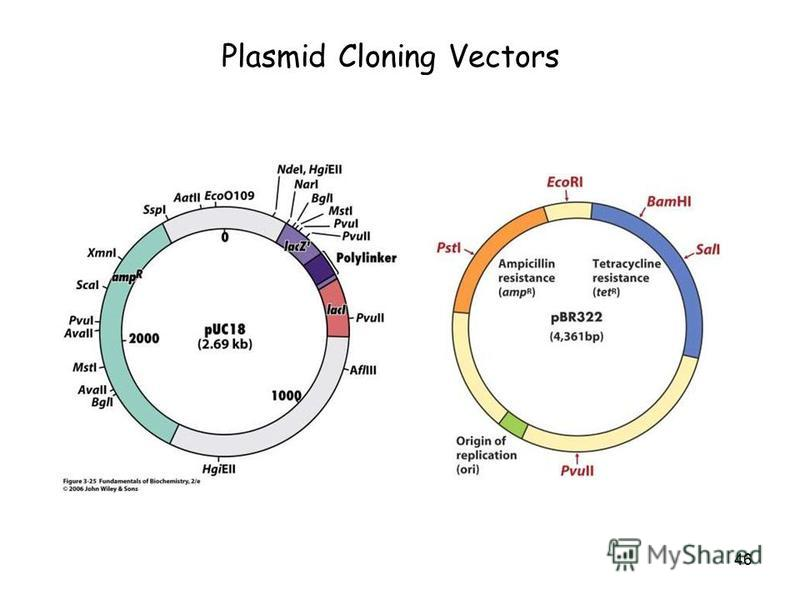 46 Plasmid Cloning Vectors