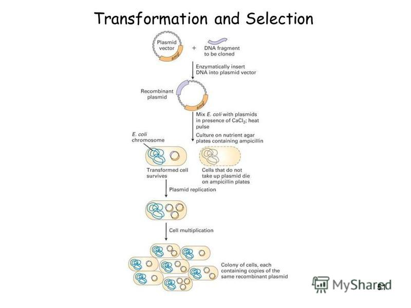 51 Transformation and Selection