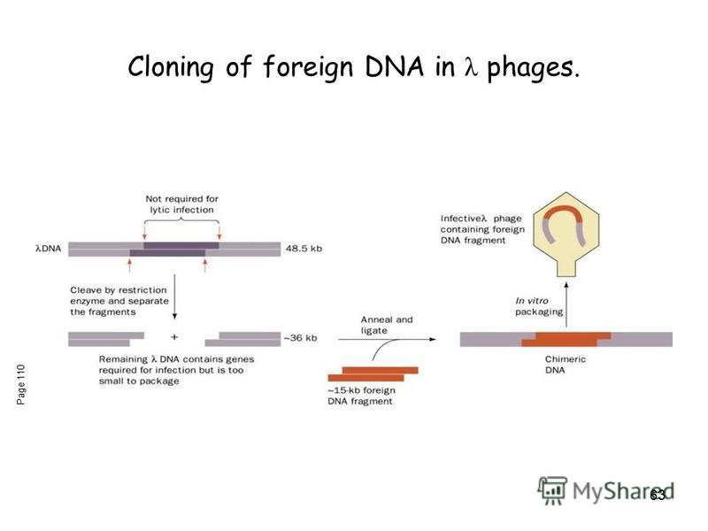 63 Cloning of foreign DNA in λ phages. Page 110