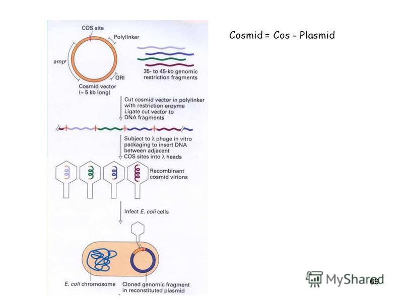 69 Cosmid = Cos - Plasmid