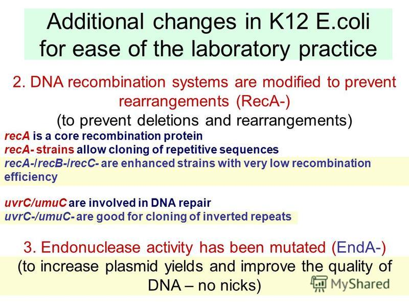 87 Additional changes in K12 E.coli for ease of the laboratory practice 2. DNA recombination systems are modified to prevent rearrangements (RecA-) (to prevent deletions and rearrangements) recA is a core recombination protein recA- strains allow clo