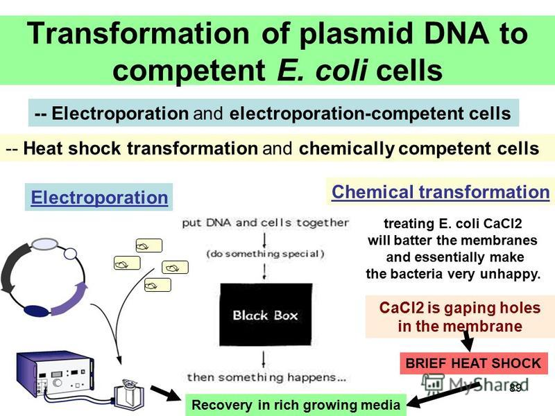 89 Transformation of plasmid DNA to competent E. coli cells -- Electroporation and electroporation-competent cells -- Heat shock transformation and chemically competent cells Recovery in rich growing media Electroporation Chemical transformation trea