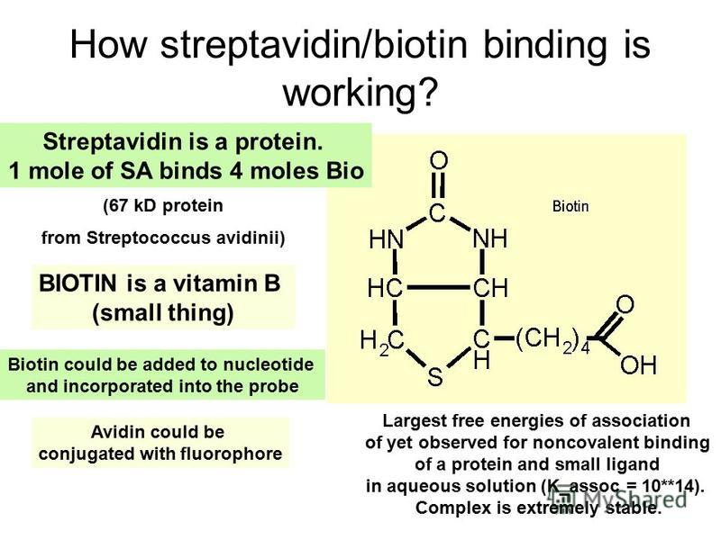 How streptavidin/biotin binding is working? Largest free energies of association of yet observed for noncovalent binding of a protein and small ligand in aqueous solution (K_assoc = 10**14). Complex is extremely stable. Streptavidin is a protein. 1 m