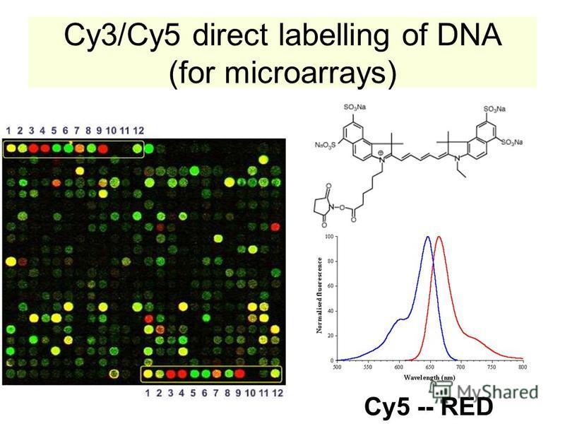 Cy3/Cy5 direct labelling of DNA (for microarrays) Cy5 -- RED