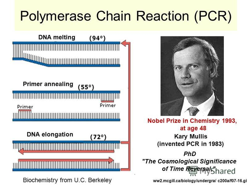 Polymerase Chain Reaction (PCR) ww2.mcgill.ca/biology/undergra/ c200a/f07-16.gif DNA melting Primer annealing DNA elongation Nobel Prize in Chemistry 1993, at age 48 Kary Mullis (invented PCR in 1983) PhD
