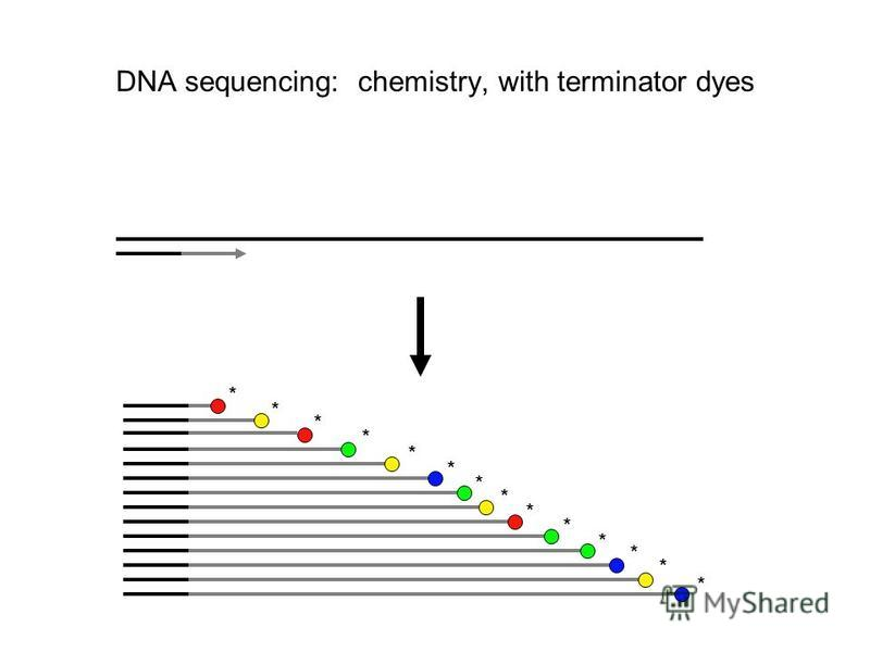 DNA sequencing: chemistry, with terminator dyes * * * * * * * * * * * * * *