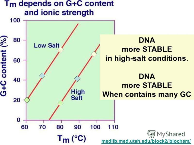 medlib.med.utah.edu/block2/ biochem/ DNA more STABLE in high-salt conditions. DNA more STABLE When contains many GC