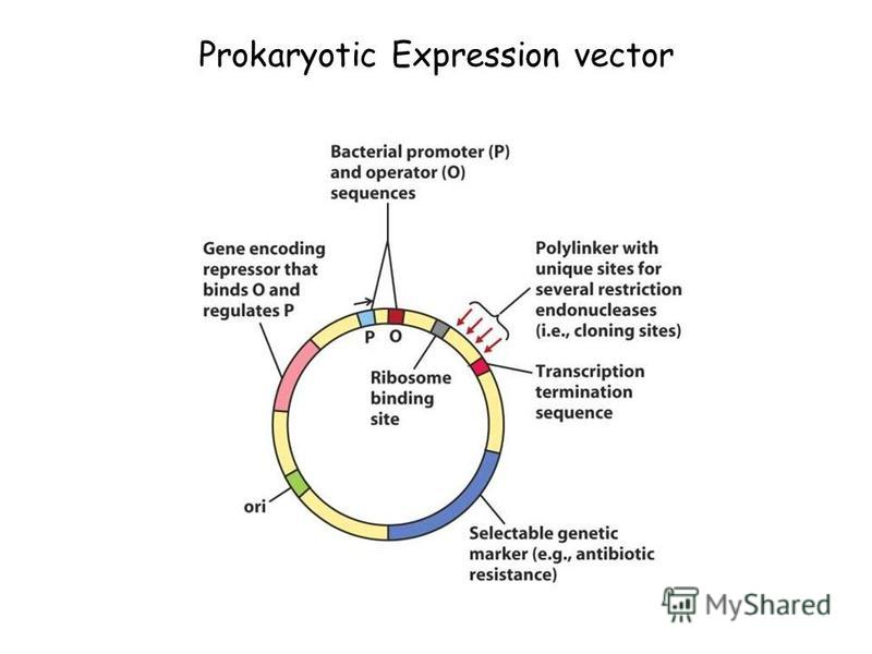 Prokaryotic Expression vector