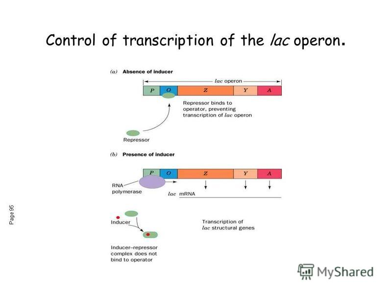 Control of transcription of the lac operon. Page 95