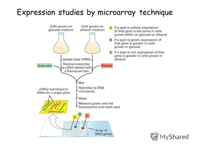 Expression studies by microarray technique