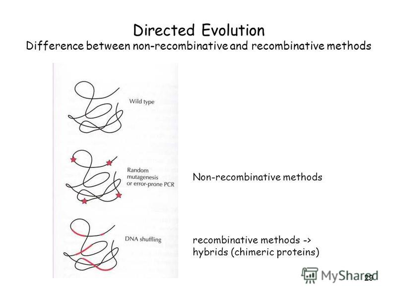 29 Directed Evolution Difference between non-recombinative and recombinative methods Non-recombinative methods recombinative methods -> hybrids (chimeric proteins)