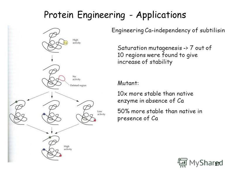 37 Protein Engineering - Applications Engineering Ca-independency of subtilisin Saturation mutagenesis -> 7 out of 10 regions were found to give increase of stability Mutant: 10x more stable than native enzyme in absence of Ca 50% more stable than na