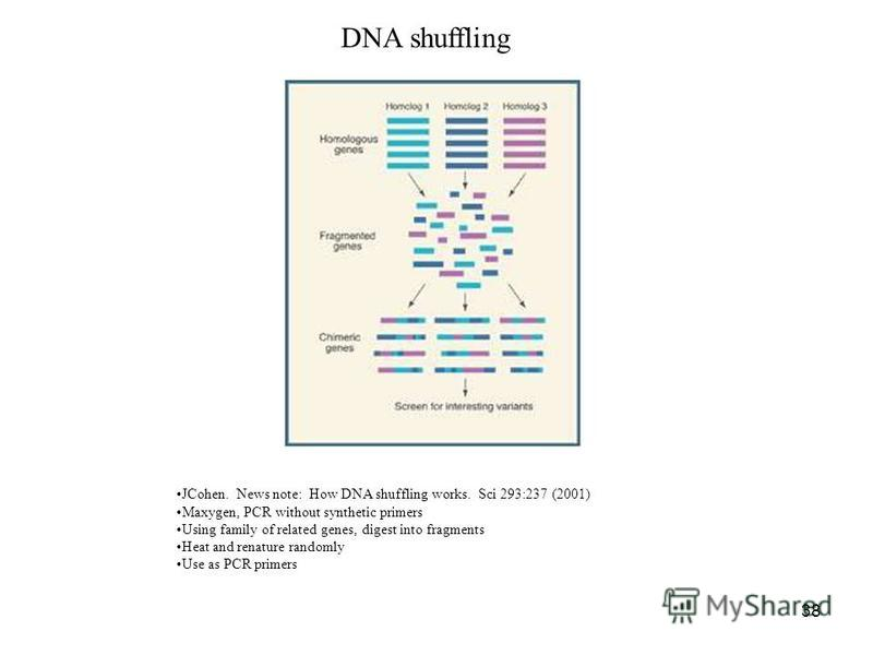 38 DNA shuffling JCohen. News note: How DNA shuffling works. Sci 293:237 (2001) Maxygen, PCR without synthetic primers Using family of related genes, digest into fragments Heat and renature randomly Use as PCR primers
