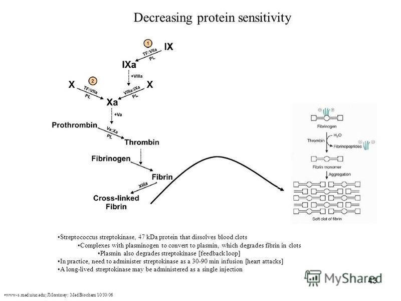 43 Decreasing protein sensitivity Streptococcus streptokinase, 47 kDa protein that dissolves blood clots Complexes with plasminogen to convert to plasmin, which degrades fibrin in clots Plasmin also degrades streptokinase [feedback loop] In practice,