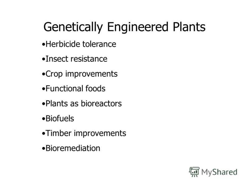 Genetically Engineered Plants Herbicide tolerance Insect resistance Crop improvements Functional foods Plants as bioreactors Biofuels Timber improvements Bioremediation