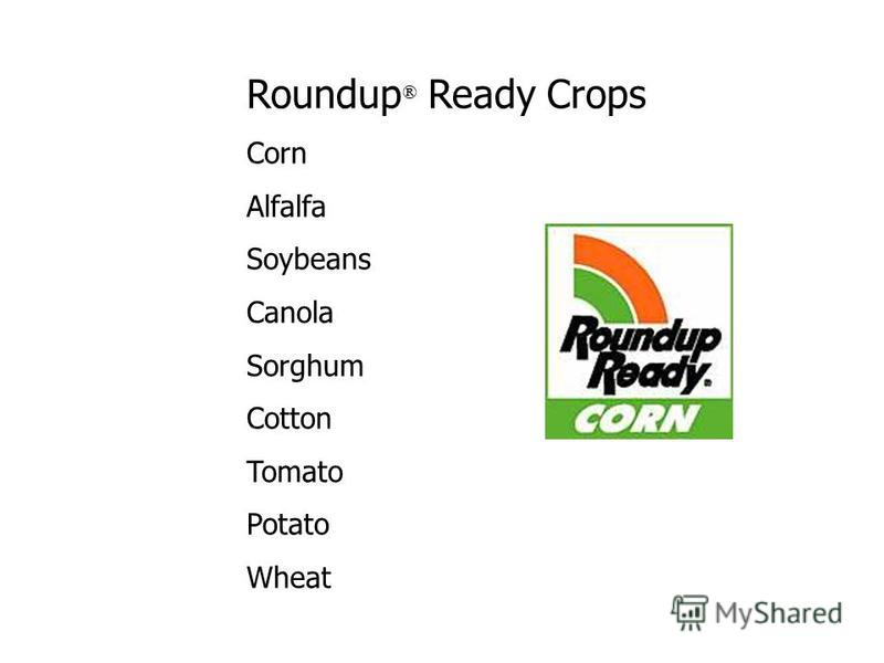 Roundup ® Ready Crops Corn Alfalfa Soybeans Canola Sorghum Cotton Tomato Potato Wheat