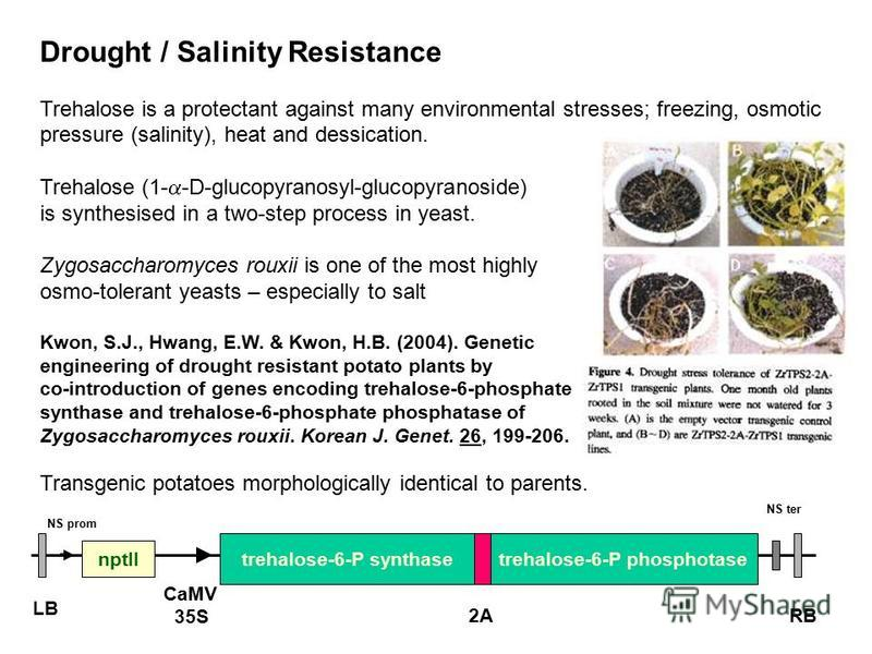 Drought / Salinity Resistance Trehalose is a protectant against many environmental stresses; freezing, osmotic pressure (salinity), heat and dessication. Trehalose (1- -D-glucopyranosyl-glucopyranoside) is synthesised in a two-step process in yeast.