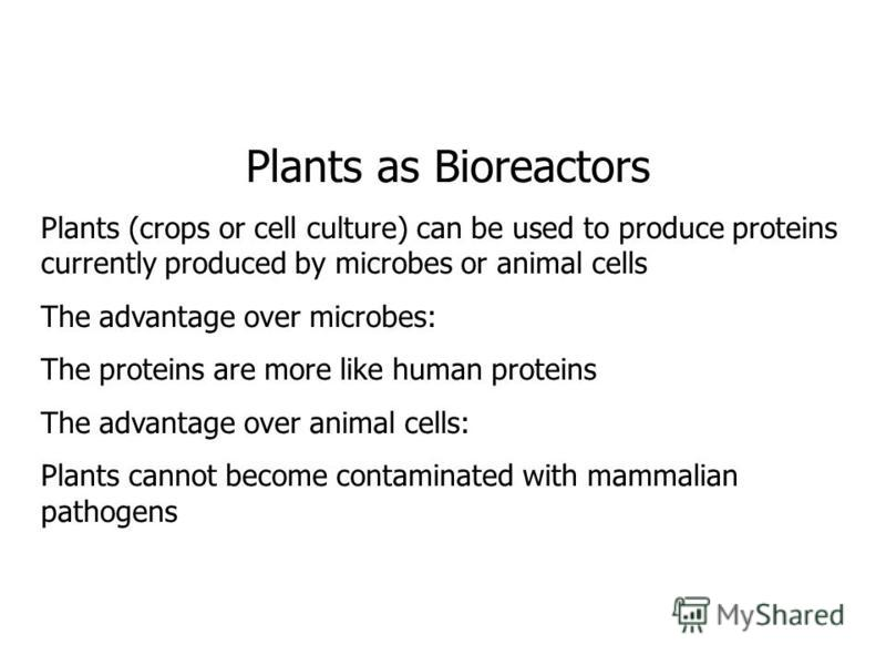 Plants as Bioreactors Plants (crops or cell culture) can be used to produce proteins currently produced by microbes or animal cells The advantage over microbes: The proteins are more like human proteins The advantage over animal cells: Plants cannot