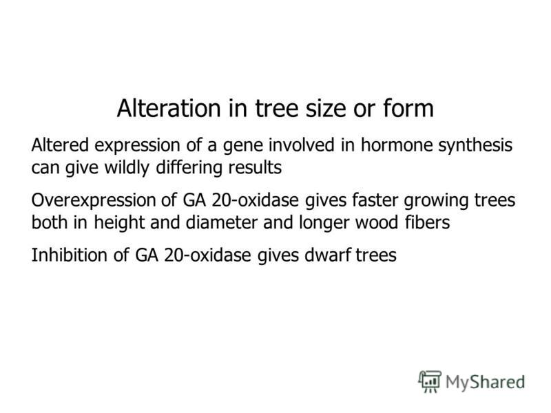 Alteration in tree size or form Altered expression of a gene involved in hormone synthesis can give wildly differing results Overexpression of GA 20-oxidase gives faster growing trees both in height and diameter and longer wood fibers Inhibition of G