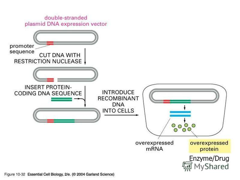 Enzyme/Drug