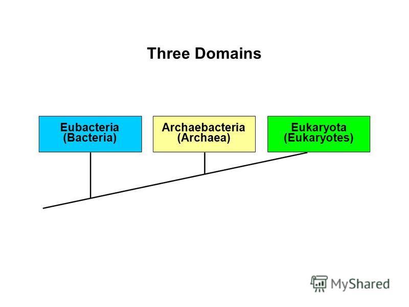 Eubacteria (Bacteria) Archaebacteria (Archaea) Eukaryota (Eukaryotes) Three Domains
