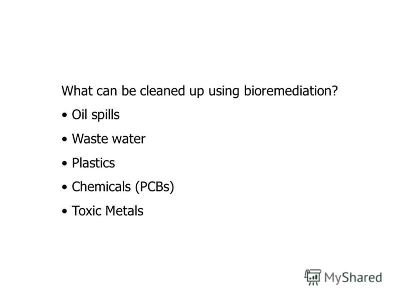 What can be cleaned up using bioremediation? Oil spills Waste water Plastics Chemicals (PCBs) Toxic Metals